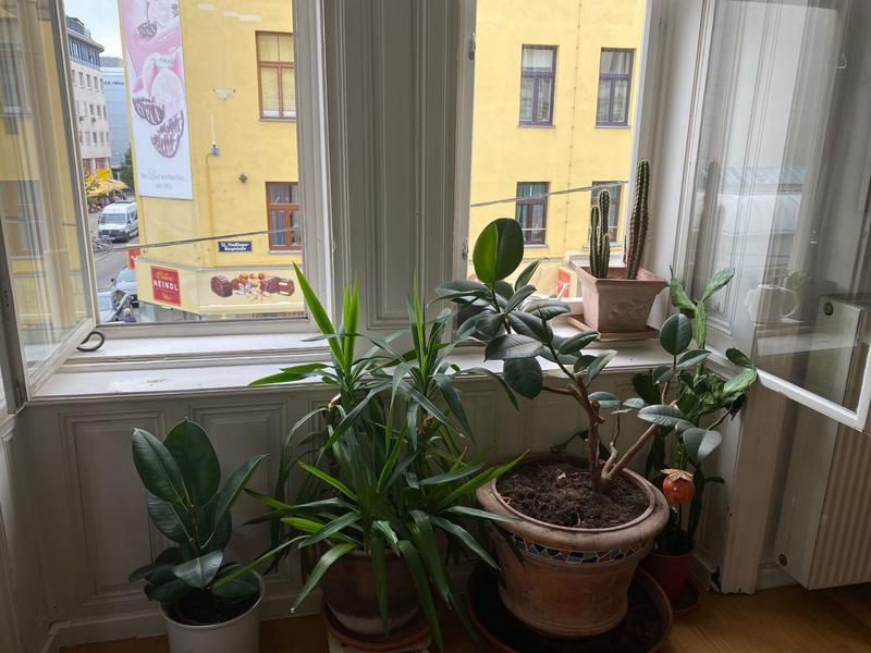 Safe-WT Ihr Steuerberater in Wien